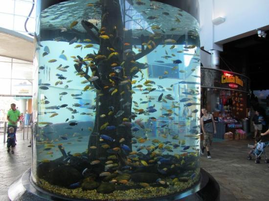 亚克力圆柱鱼缸水族馆