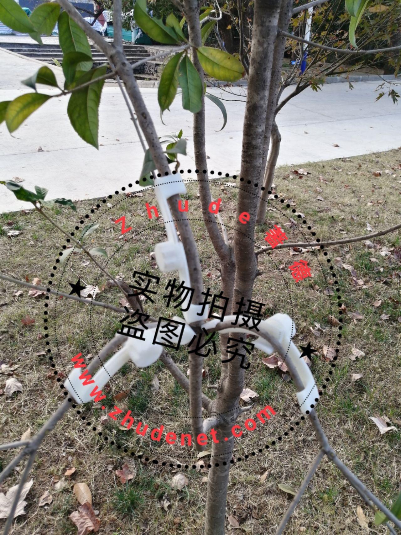 果树枝条压角器易定形抽枝器 厂家全国招代理