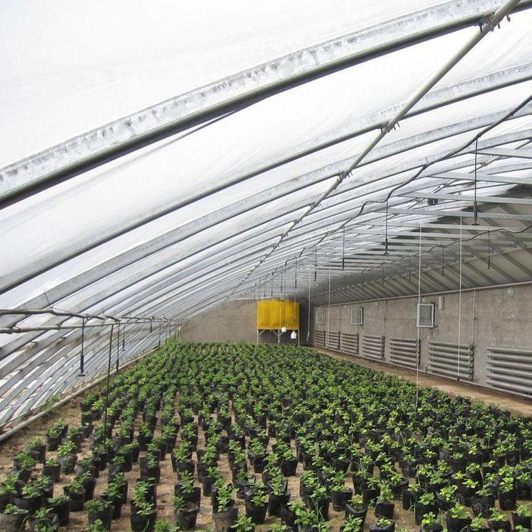 厂家直销温室大棚 搭建葡萄避雨棚 葡萄温室大棚欢迎订购 益邦温室大棚