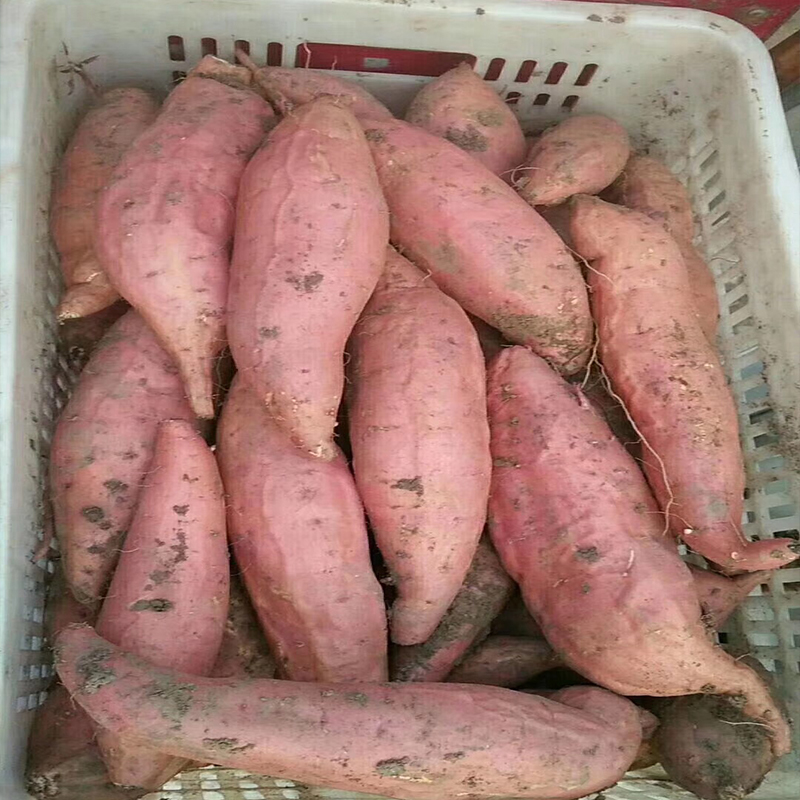 生红薯 红薯批发 无公害食品 全国售卖 薯蜜丝