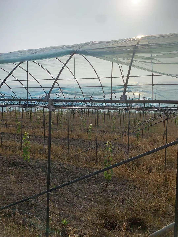 中兴温室大棚---养殖大棚---精选厂家----厂家直销